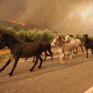 Cantabria se ha quemado